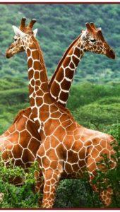 Гибкий обогреватель Жирафы