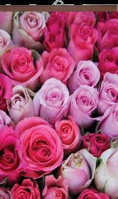 Гибкий обогреватель Розы