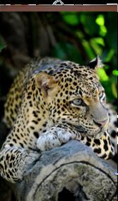 gibkij-obogrevatel Леопард